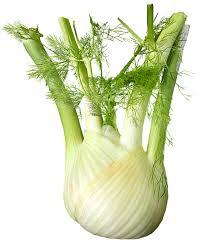 fennelbulb